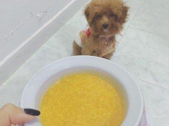 【人狗共食餐單】南瓜濃湯 (魚)