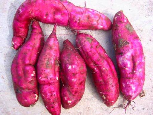 冬季的紅薯千萬不能隨便吃